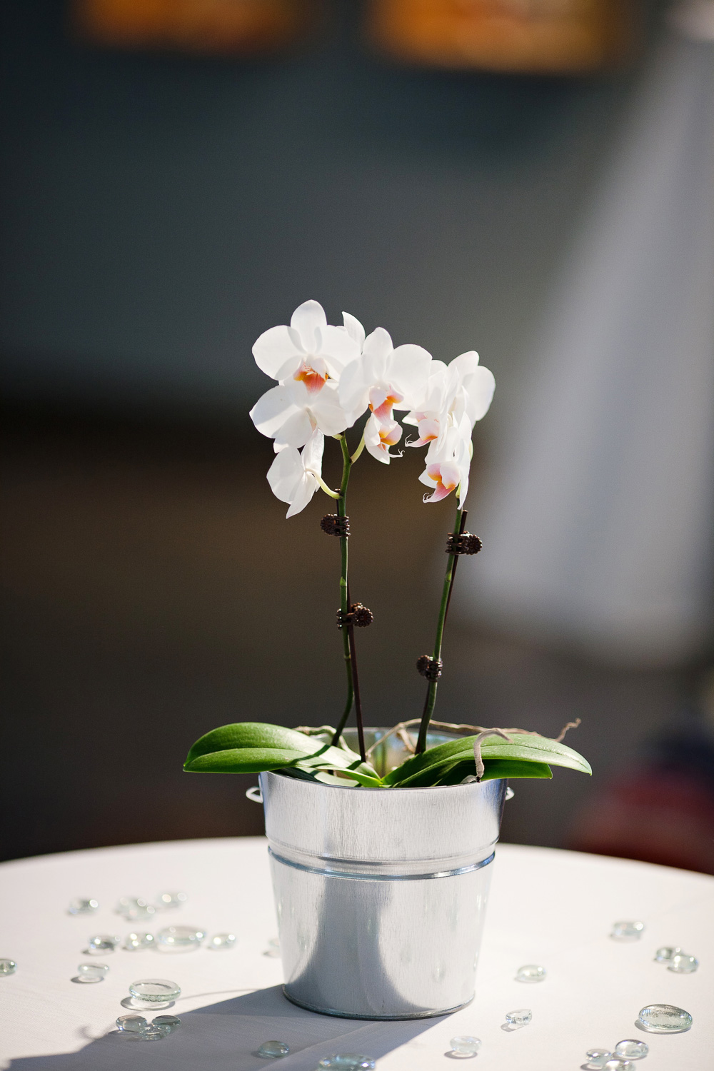 Wedding | Orchid Centerpiece