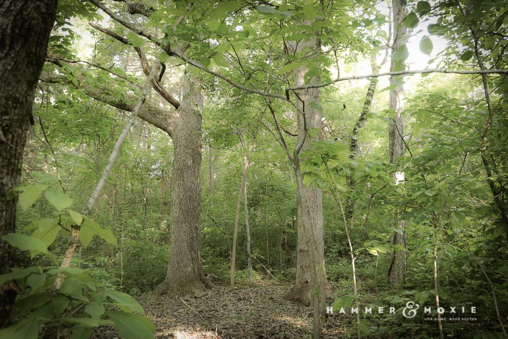 Treehouse location | Hammer & Moxie